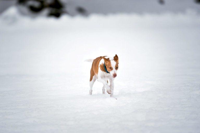 Schnee5.1
